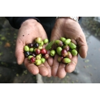 3 x Huile d'olive vierge 5 litres