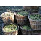 (6 x 12€) Gourmet Flasche 50 cl. Natives Olivenöl extra