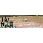 12 x Miniature bottle 6 cl. extra virgin olive oil