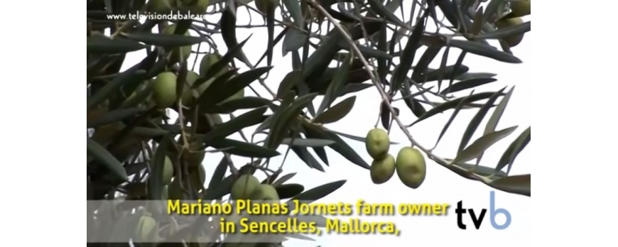 Video Televisió de Balears