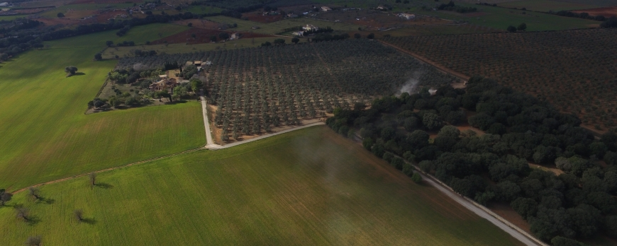 Jornets oil Mallorca