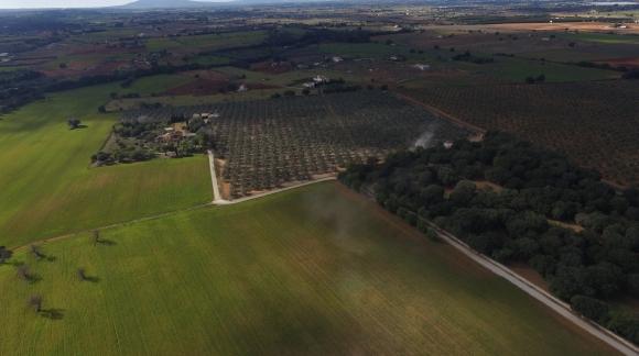 JORNETS aceite de Mallorca